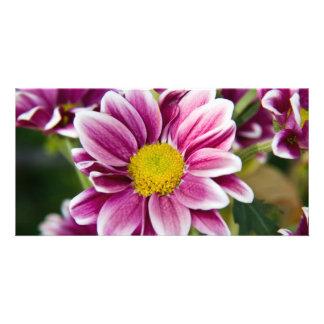 Purple daisy picture card