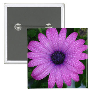 Purple Daisy with Raindrops Pinback Buttons