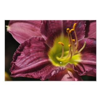 Purple Daylily Art Photo