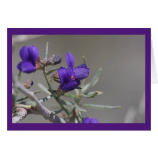Purple desert wildflower card