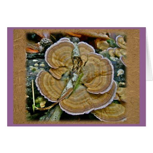 Purple Edge Shelf Fungus Coordinating Items Greeting Card