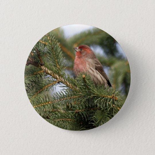 Purple Finch 6 Cm Round Badge