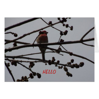 Purple Finch, Bright and Cheery Note Card