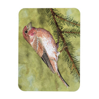Purple Finch Magnet
