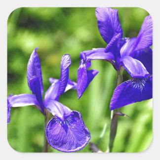 Purple Fireworks- Shakespeares Garden Square Stickers