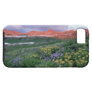 Purple Fleabane (erigeron peregrinus) and Yellow Case For The iPhone 5