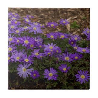 Purple Floral Tiles