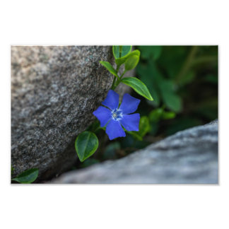 PURPLE FLOWER AND STONES by Michelle Diehl Photographic Print