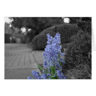 Purple Flower Black & White Card