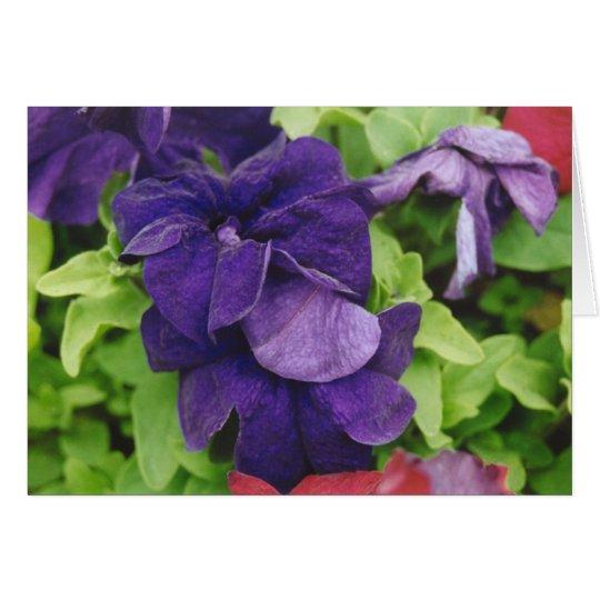 Purple Flower Card