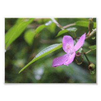 Purple Flower. Photo Art
