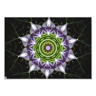 Purple Flower Photograph