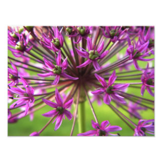 Purple Flower Photography Photo Print