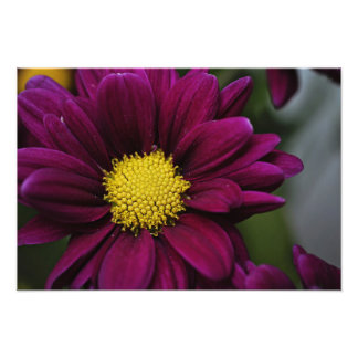 Purple Flower Print Photo Art