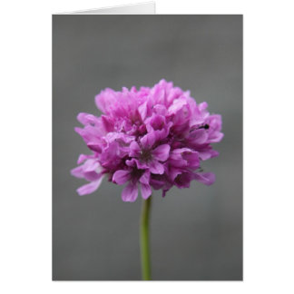 purple flower with ant card