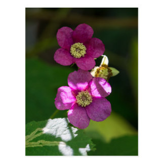 Purple-flowering Raspberry Wildflower Postcard