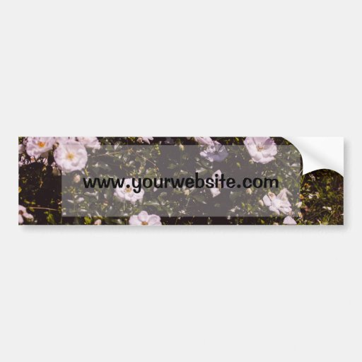 Purple Flowers, Floral Photography Bumper Stickers