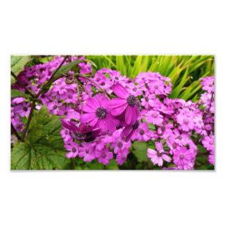 Purple Flowers from San Francisco Photo Print