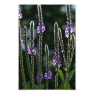 PURPLE FLOWERS | GOOD EARTH STATE PARK ART PHOTO