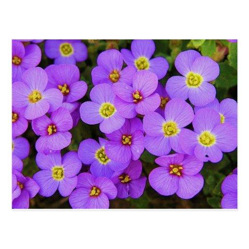 Purple Flowers Peace Love Destiny Postcards