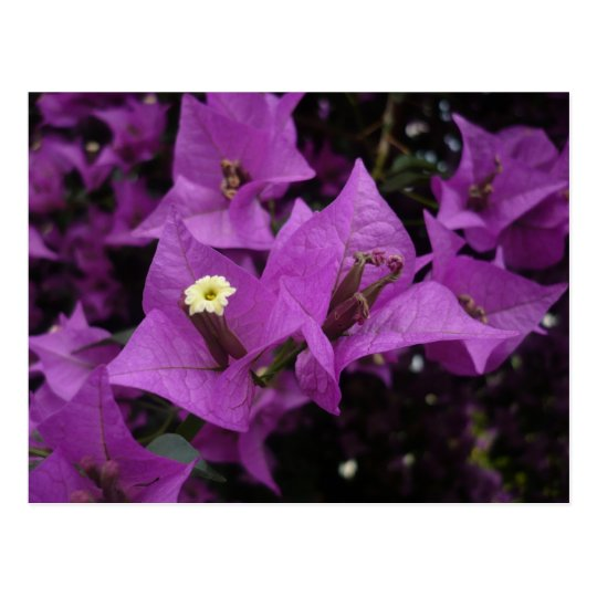 Purple flowers | Postcard