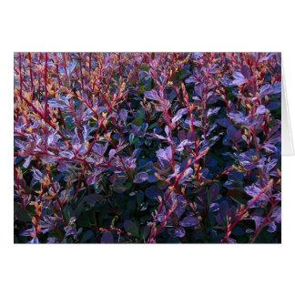 Purple Foliage Explosion Card