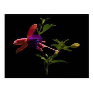 Purple Fuchsia Flower Postcard