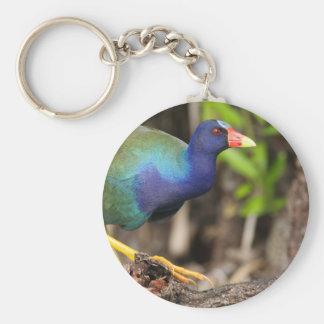 purple gallinule key chain