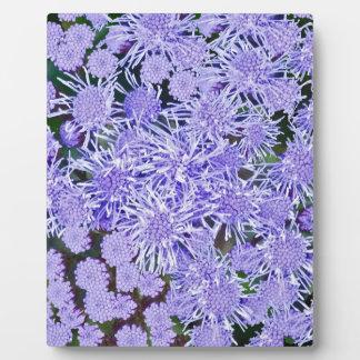 Purple garden of mums plaque
