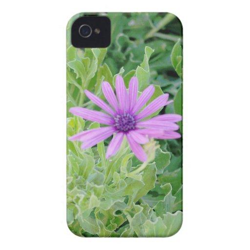 Purple Gerbera Floral Blackberry Bold Case