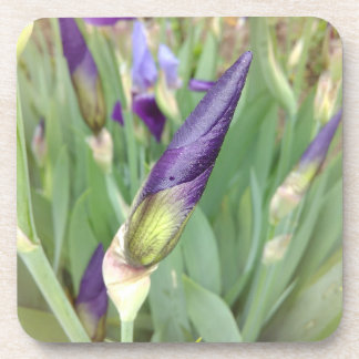 Purple German Iris Bud Coaster