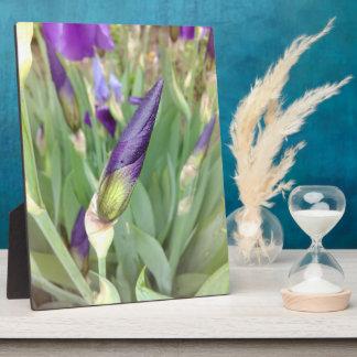 Purple German Iris Bud Plaque