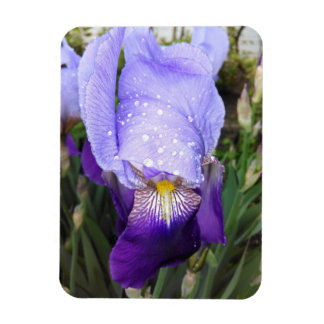 Purple German Iris With Some Raindrops Magnet