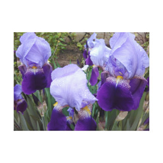 Purple German Irises Canvas Print