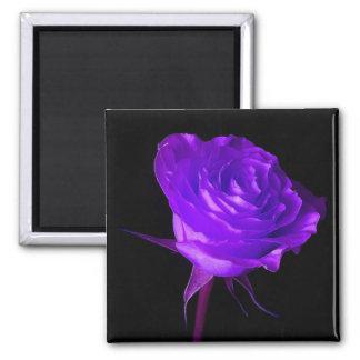 """Purple Glow"" Rose Square Magnet"