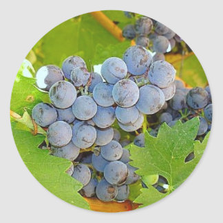 Purple Grapes at Harvest Photo Classic Round Sticker