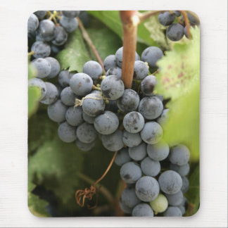 Purple grapes on the vine mouse pads