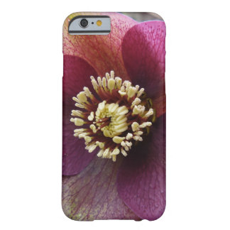 Purple Hellebore Flower Barely There iPhone 6 case