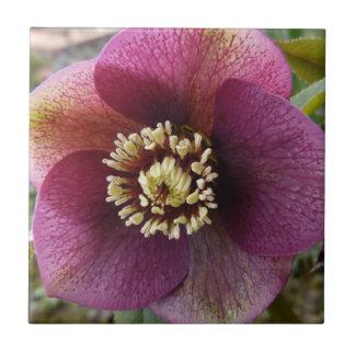 Purple Hellebore flower Small Square Tile
