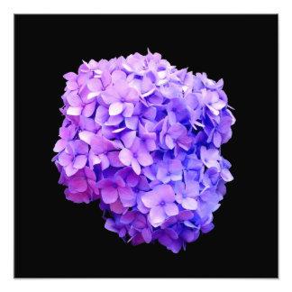 'Purple Hydrangea Bloom' Photographic Print