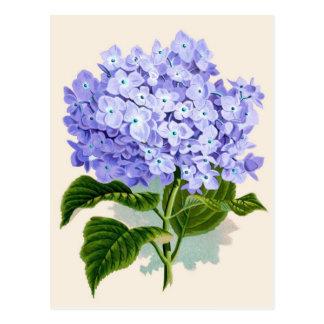 Purple Hydrangea Botanical Print Postcard