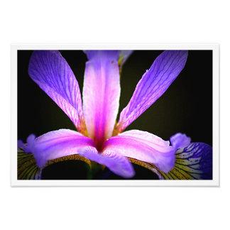 Purple Iris 3e Art Photo