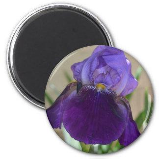 Purple Iris 6 Cm Round Magnet