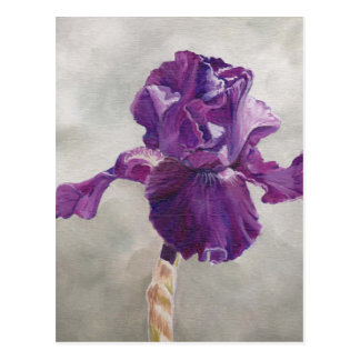 Purple Iris Art Postcard
