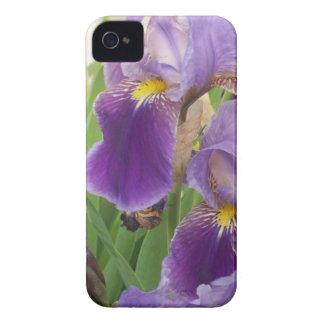 Purple Iris iPhone 4 Cover