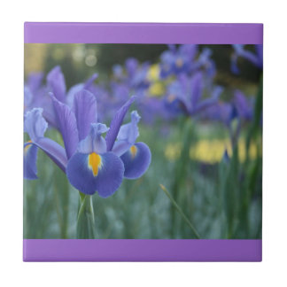 Purple Iris Ceramic Tile