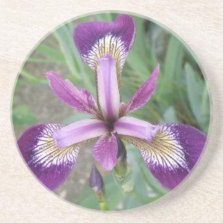 Purple Iris Coasters