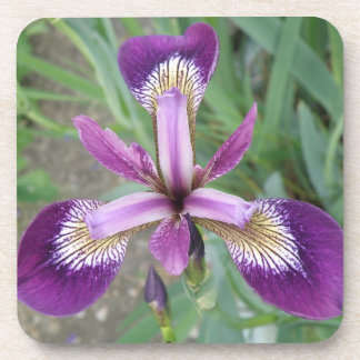 Purple iris Cork Coaster