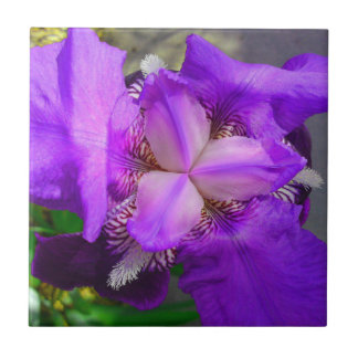 Purple Iris Flower Tile