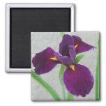Purple Iris Fridge Magnet
